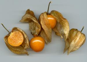 Die Andenbeere (Physalis peruviana)