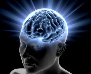 Zusammenhang zwischen Wachstum des Gehirns und Anstieg der Intelligenz